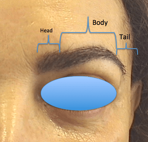 eyebrow_trans_kr